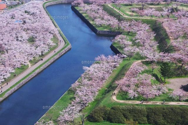 五稜郭公園の桜 (c)Image House/a.collectionRF