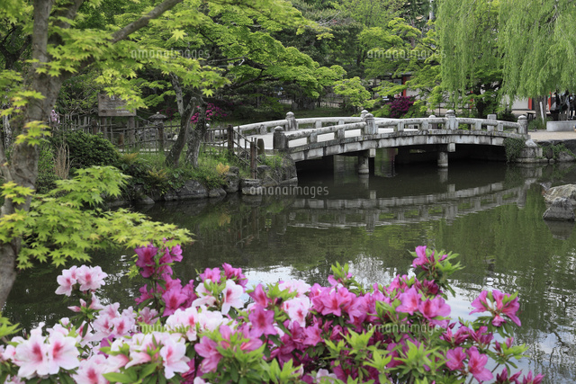 新緑の円山公園とツツジ (c)HIRO/a.collectionRF