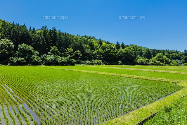 水田と里山と青空 (c)pasmal/a.collectionRF