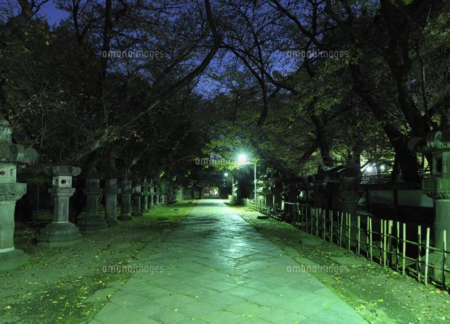 真夜中の上野東照宮の参道 (c)PHOTOLIFE/a.collectionRF