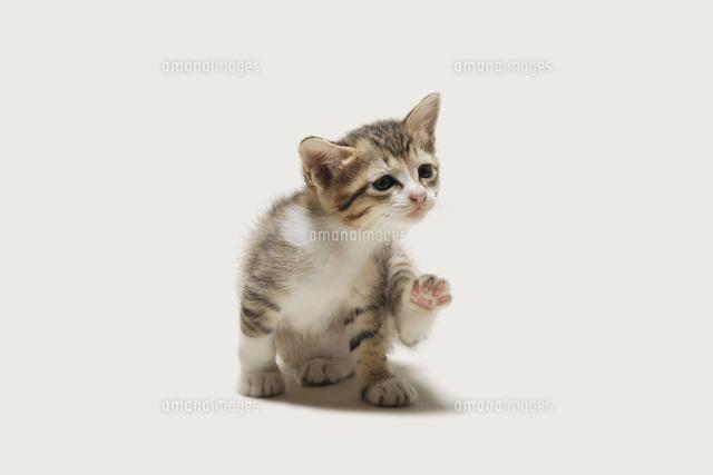 おどけた様子の子猫 (c)PHOTOLIFE/a.collectionRF