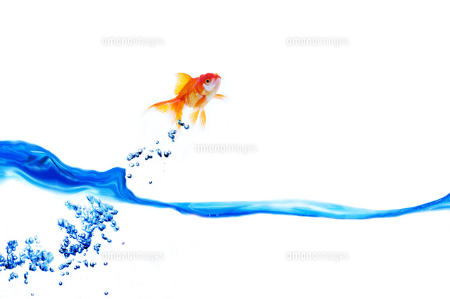 水面から飛ぶ金魚 (c)IDC/a.collectionRF