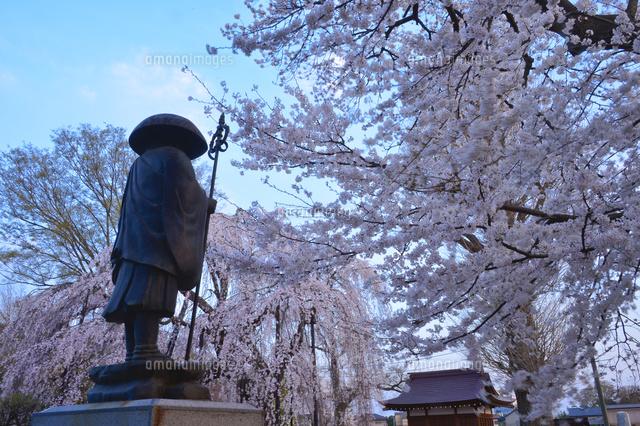 清龍院のシダレザクラと僧像 (c)JUNKO TAKAHASHI/a.collectionRF
