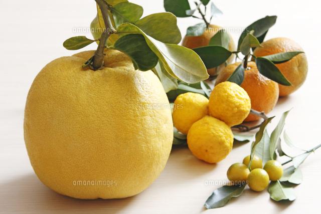 晩白柚 きんかん 柚子 橙