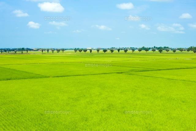 青空と田園風景[10370000961]  ...