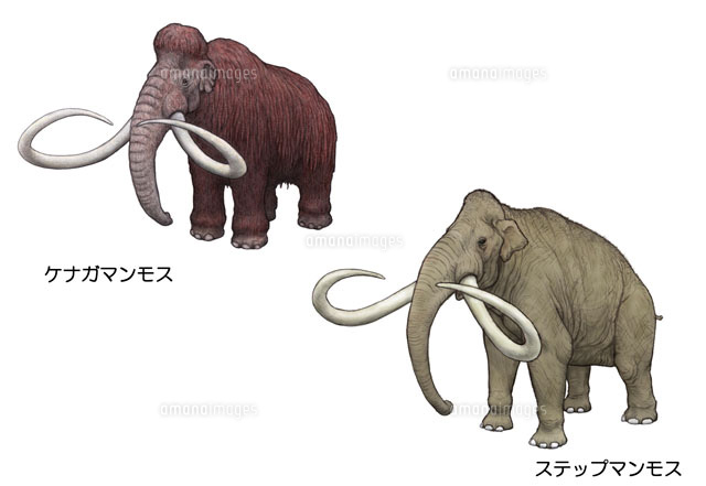シミュレーションツール 第四紀 アジアの生き物 マンモス[10385000018]  写真素材・