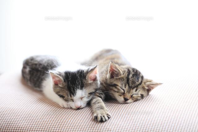 仲良く眠る子猫 (c)MASAFUMI KIMURA/a.collectionRF