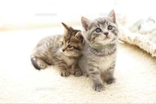 並んだ2匹の猫 (c)Shinya Sasaki/a.collectionRF