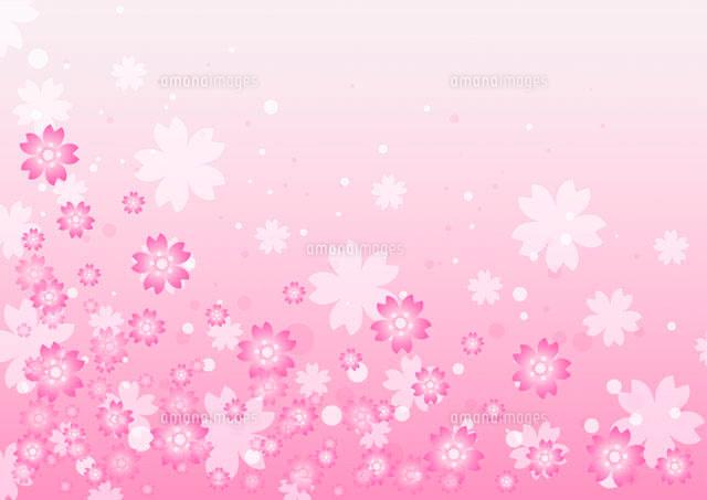 桜の背景[11026005068]| 写真素材 ...