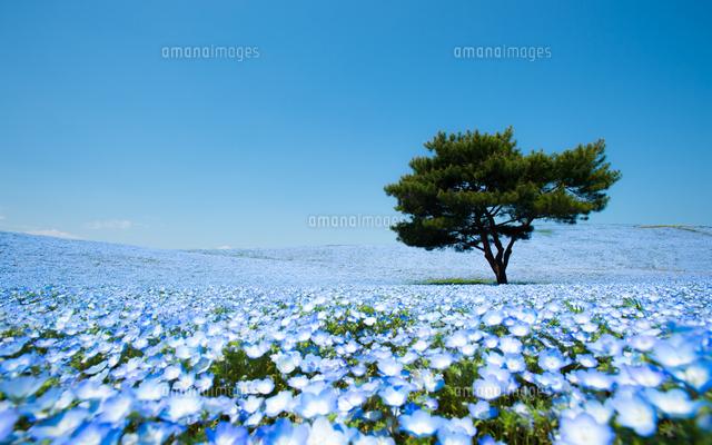 The Blue Field (c)Teerayut Hiruntaraporn/500px