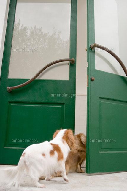 ドアの向こうを覗く犬 (c)DAJ