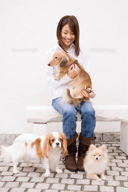 犬の毛の手入れをする女性 (c)DAJ