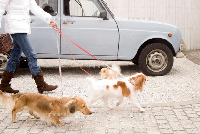 散歩中の犬 (c)DAJ