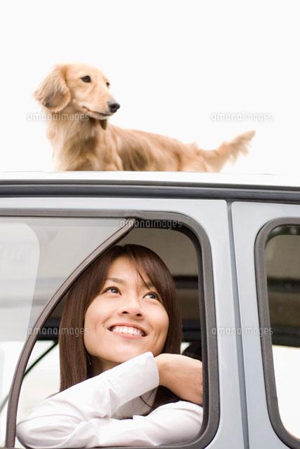 車上のミニチュアダックスフントと女性 (c)DAJ