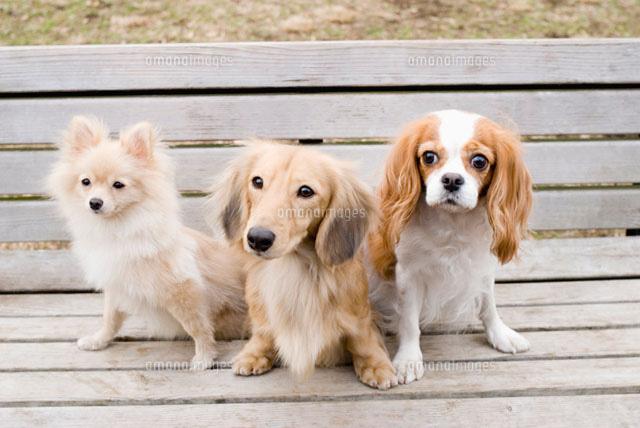 ベンチに座る犬 (c)DAJ