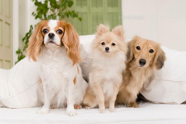 ソファに座る犬達 (c)DAJ