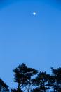 玉置神社から見た夕空