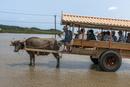 浅瀬を渡る水牛車