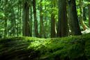 原生林の新緑
