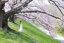 桜の木の下で深呼吸する女性