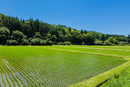 水田と里山と青空