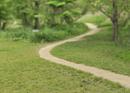 新緑の田舎道
