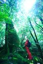 屋久杉を見上げる女性