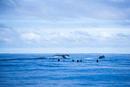 スノーケルをする人々とザトウクジラの尾びれ