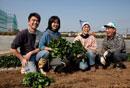 収穫したホーレンソウを持つ農家