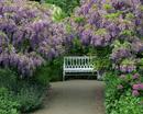 藤と白いベンチ