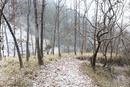 雪のクヌギ林