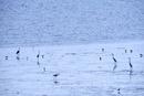 佐賀県 有明海の干潮