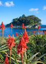 アロエの里に咲くアロエと竜宮島