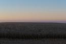 平原の夜明け前