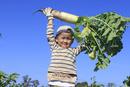 大根を収穫する男の子