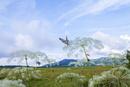 八島ケ原湿原のシシウドと蝶