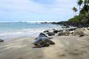 ラニアケアビーチの砂浜のアオウミガメ