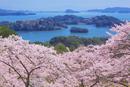 西行戻しの松公園の桜と松島