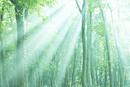 森林浴木もれ日