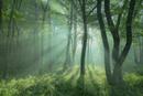 朝日がさし込む霧の森