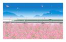 コスモス畑を走るE5系新幹線はやぶさ