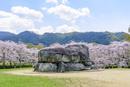日本の桜風景 石舞台古墳