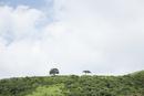 山の稜線に生える木々