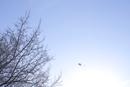 冬の空に空高く揚がる凧