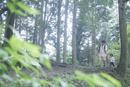 森の中を幼児の手を引いて歩く父親