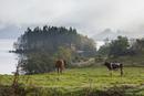 牧草地でくつろぐ牛