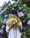 女性と紫陽花