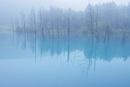 霧雨の青い池