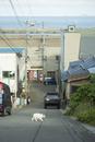 礼文島の街並と猫