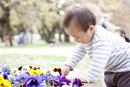 花壇の花を観察する男の子